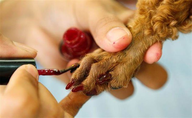 Le vernis à ongles…pour chien !