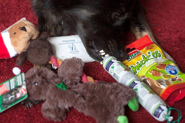 doggybox-noel2014