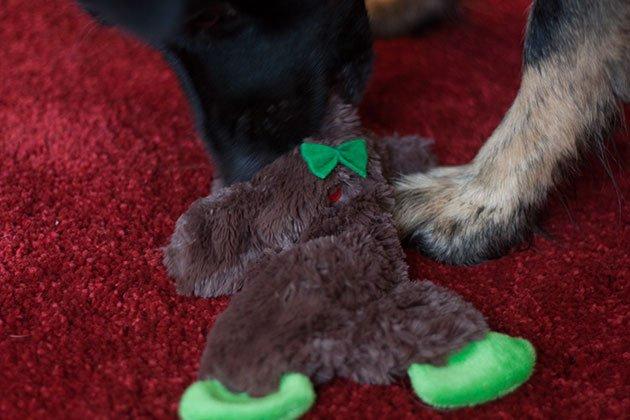 jouet chien karlie