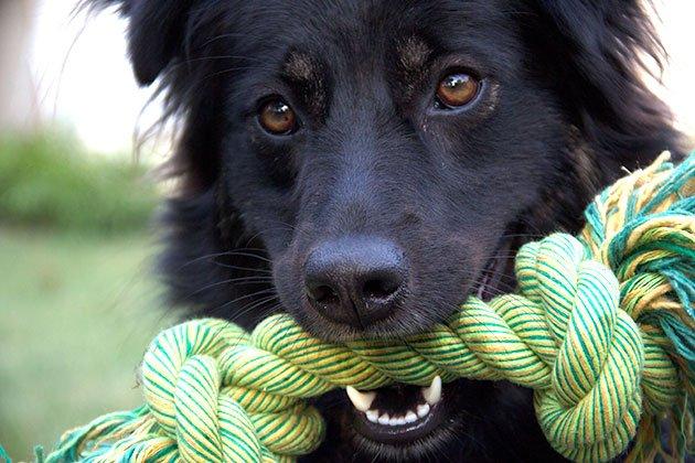 jouet-corde-chien