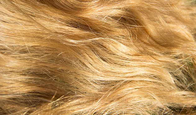 Cheveux blonds Mulato