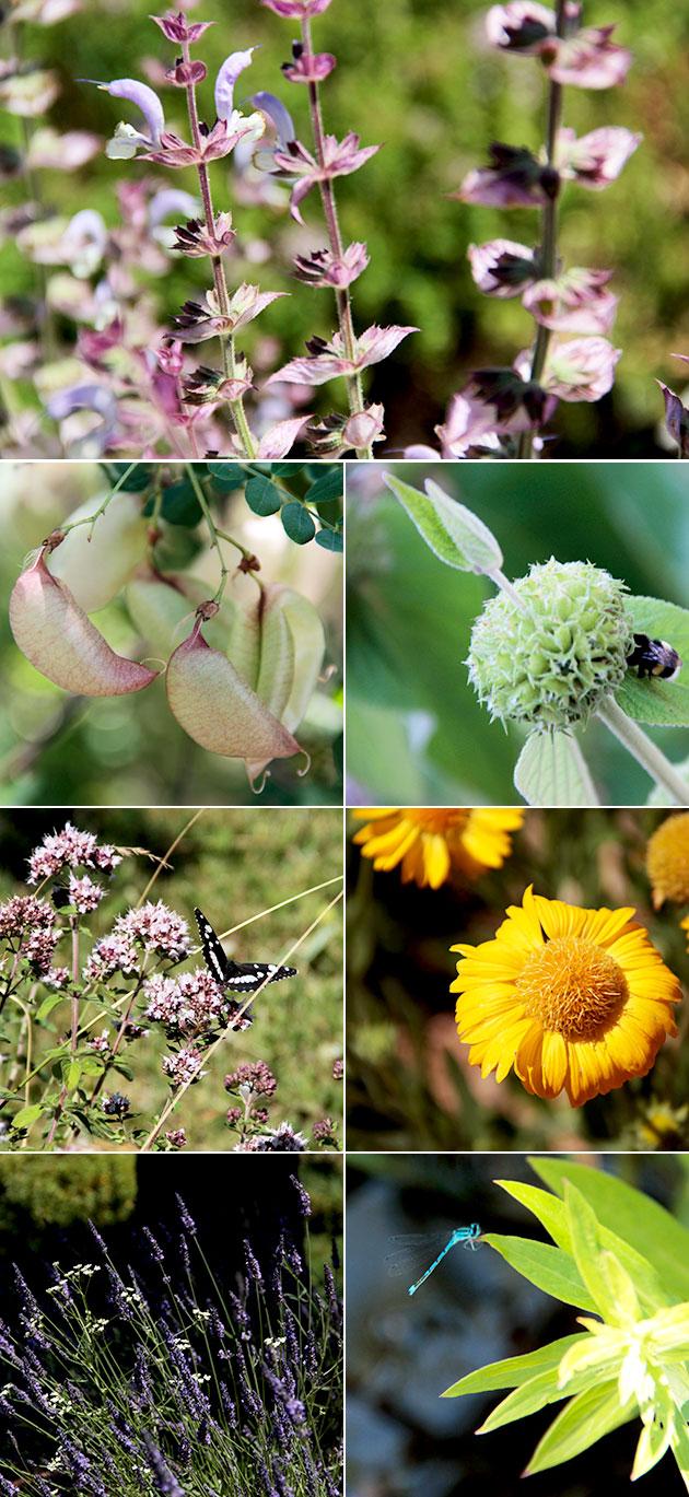 Sanoflore jardin botanique et vercors juste sublime for Papillons jardin botanique 2016