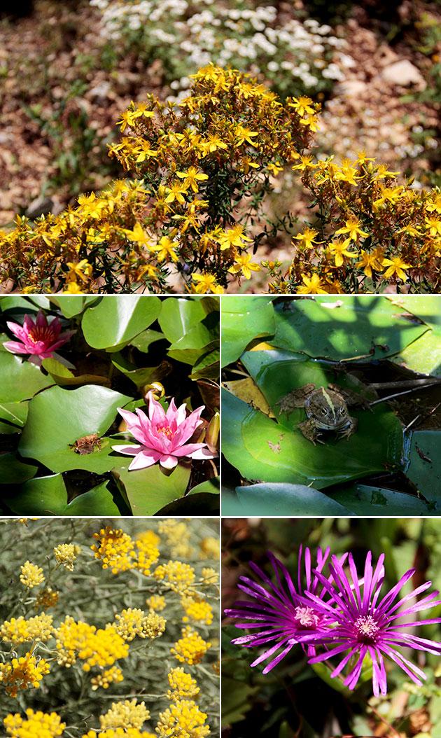 Jardin Botanique Sanoflore - Vercors
