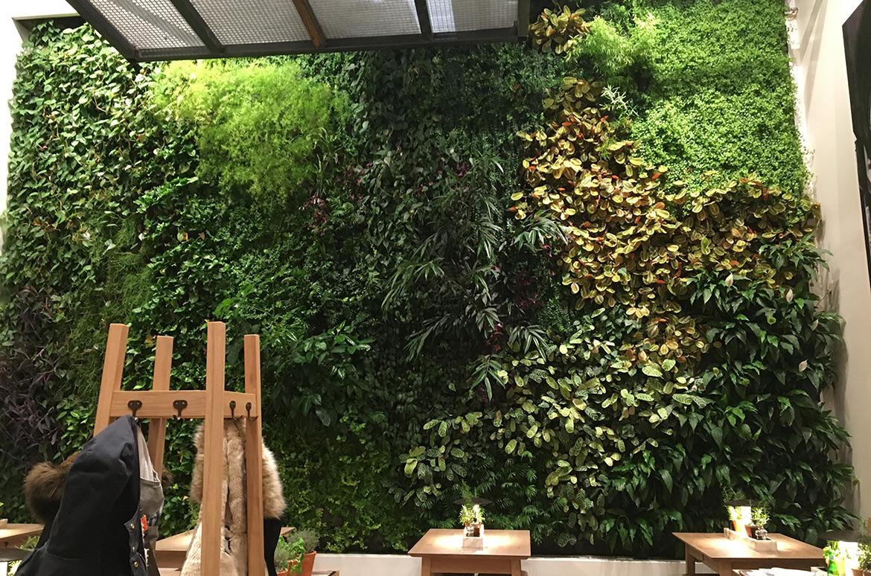Mur Végétal Vapiano