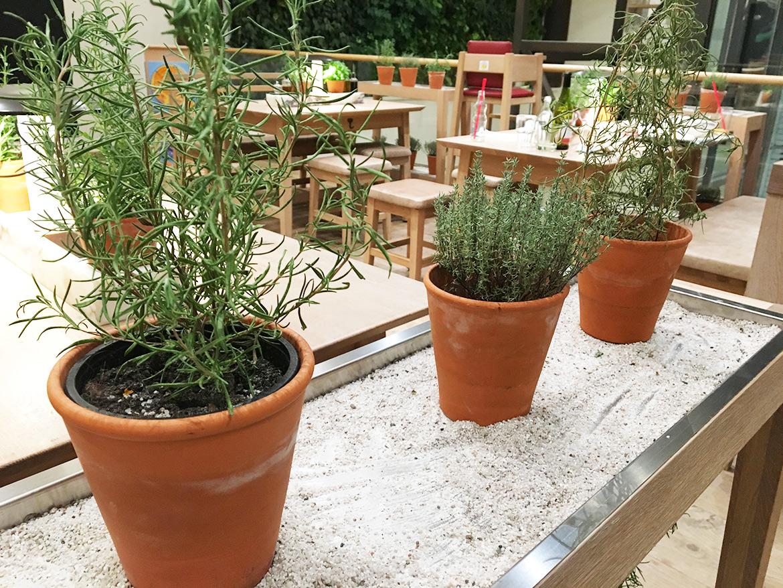 Plantes Aromatiques Vapiano