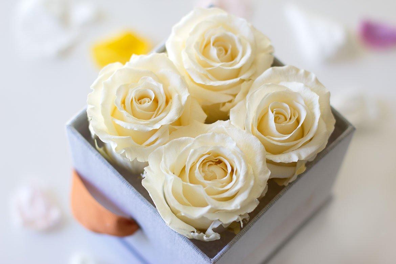 Box Roses éternelles blanches gros plan