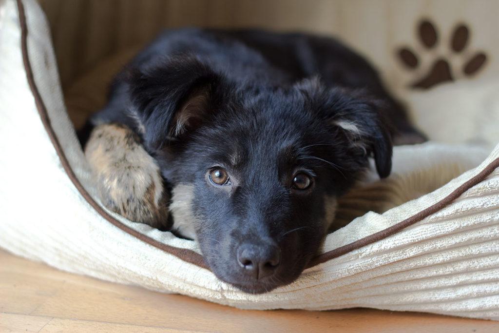 Adopter un chien: conseils