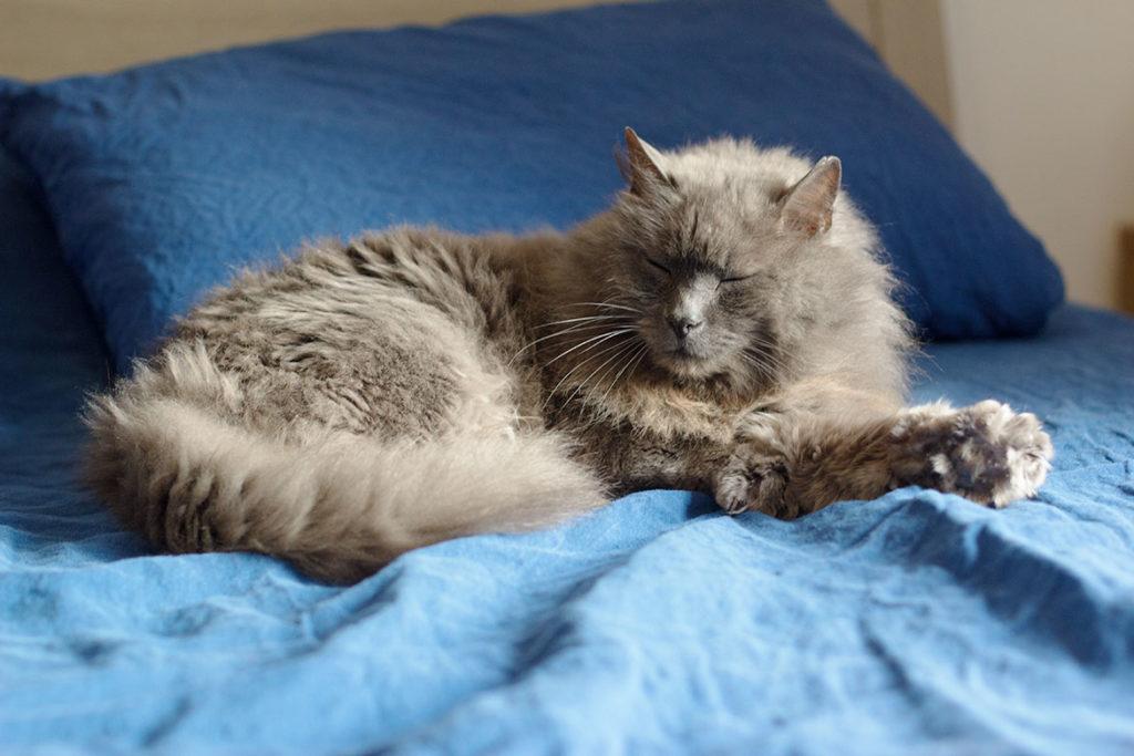chat sur draps en lin