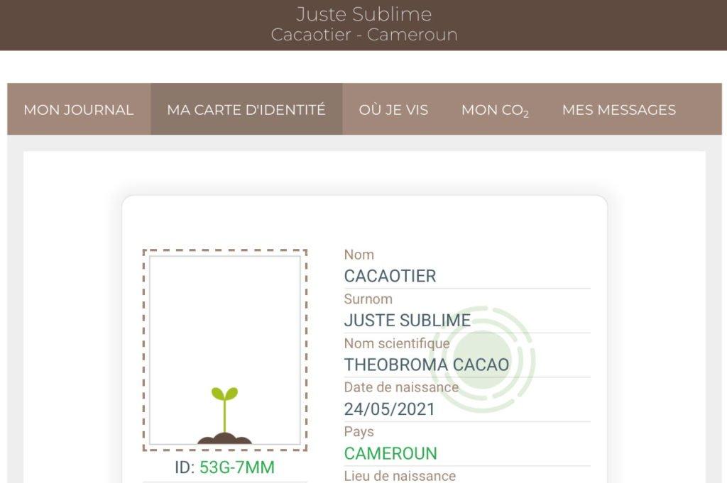 planter un cacaotier avec Treedom